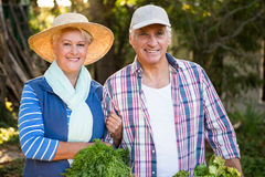 Portrait of happy couple with vegetables at garden stock images
