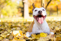 Portrait of a happy dog stock image