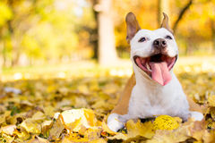 Portrait of a happy dog stock images