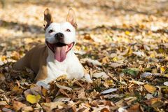 Portrait of a happy dog royalty free stock image