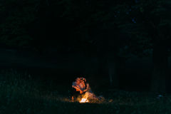 Portrait of the happy embracing couple sitting by fire at night Stock Photography