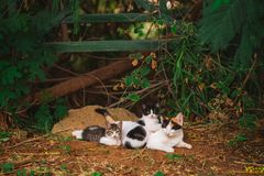 Portrait of happy family of three street cats relaxing outdoor. Horizontal color photography royalty free stock image
