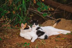 Portrait of happy family of two street cats relaxing. Outdoor. Horizontal color photography stock images