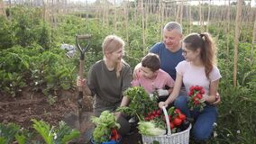 Cheerful family of four talking while sitting on summer day in home garden with harvested vegetables
