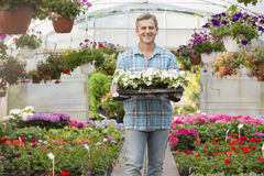 Portrait of happy gardener carrying crate with flower pots in greenhouse Stock Photography