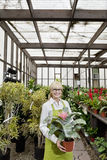 Portrait of a happy gardener holding pot plant in greenhouse Stock Photos