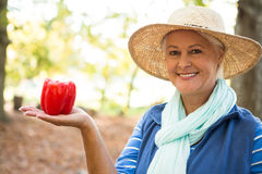 Portrait of happy gardener with red bell peppers at garden stock images