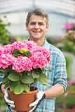 Portrait of happy man holding flower pot in greenhouse Stock Image