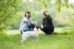 Portrait of happy mather with son and dog Jack Russell in summer park. For walk Stock Photography