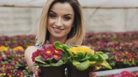 Portrait of happy pretty girl shows flowerpot at camera with smile stock video footage