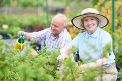 Senior Woman Gardening in Plantation stock photo