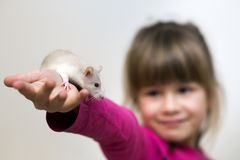 Portrait of happy smiling cute child girl with white pet mouse hamster on light copy space background. Keeping pets at home, care. And love to animals concept royalty free stock images