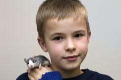 Portrait of happy smiling funny cute handsome child boy with white pet mouse hamster on shoulder on light copy space background. Keeping pets at home, care and royalty free stock photography