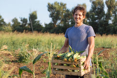 Portrait of happy smiling young farmer holding wooden box with corn on the field stock image