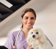 Portrait Of Happy Vet Smiling At Camera With Dog. Confident young hispanic woman at work as veterinary, happy vet playing with dog during house call. Animal Royalty Free Stock Photography