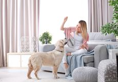 Portrait of happy woman with her dog. At home Stock Photos
