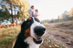 Portrait of happy young couple in stylish clothes feeding dog outside. autumn forest.  Royalty Free Stock Image