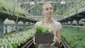 Portrait of happy young woman walking with flowers in greenhouse. Middle shot of blond Caucasian biologist enjoying work