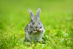 Portrait of Hare Stock Photography
