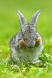 Portrait of Hare Royalty Free Stock Photo