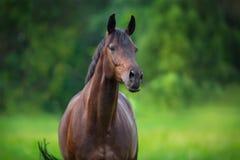 Portrait haut étroit de cheval Images stock