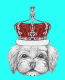 Portrait of Havanese with crown. Hand drawn illustration of dog royalty free illustration