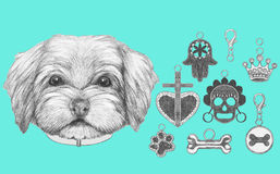 Portrait of Havanese with dog-collar. Hand drawn illustration vector illustration