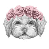 Portrait of Havanese with floral head wreath. Hand drawn illustration of dog royalty free illustration