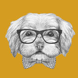 Portrait of Havanese with glasses and bow tie. Hand drawn illustration of dog stock illustration