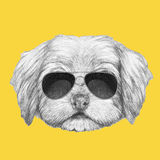 Portrait of Havanese with glasses. Hand drawn illustration of dog royalty free illustration