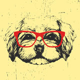 Portrait of Havanese with glasses. Hand drawn illustration of dog. T-shirt design. Vector royalty free illustration