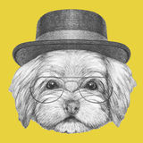 Portrait of Havanese with hat and glasses. Hand drawn illustration of dog stock illustration