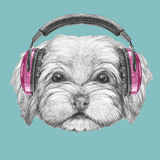 Portrait of Havanese with headphones. Hand drawn illustration of dog royalty free illustration