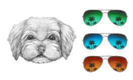 Portrait of Havanese with mirror sunglasses. Hand drawn illustration of dog stock illustration