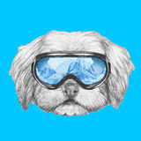 Portrait of Havanese with ski goggles. Hand drawn illustration of dog royalty free illustration