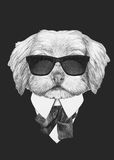 Portrait of Havanese in suit. Hand drawn illustration of dog Stock Photos