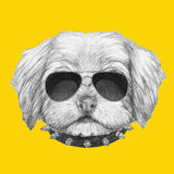 Portrait of Havanese with sunglasses and collar. Hand drawn illustration of dog stock illustration