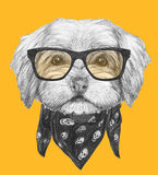 Portrait of Havanese with sunglasses and scarf. Hand drawn illustration of dog stock illustration