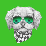 Portrait of Havanese with sunglasses and scarf. Hand drawn illustration of dog royalty free illustration