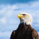 Portrait of head of American bald eagle, Haliaeetus leucocephalu. S against blurred sky Stock Photography