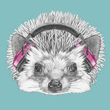 Portrait of Hedgehog with headphones. Royalty Free Stock Image