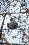Portrait of heron standing on nude tree branch in winter Royalty Free Stock Images
