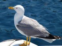 Water bird Royalty Free Stock Image