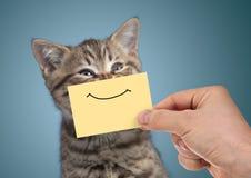 Portrait heureux de chat avec le sourire drôle sur le carton photos libres de droits