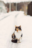 Portrait of homeless cat looking at camera Royalty Free Stock Photography
