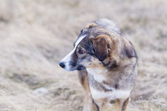 Portrait of a homeless dog outdoor Stock Photo