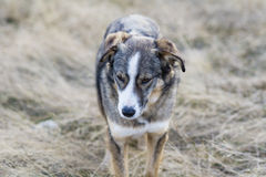 Portrait of a homeless dog outdoor Royalty Free Stock Images