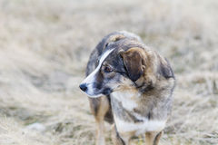 Portrait of a homeless dog outdoor Royalty Free Stock Photography