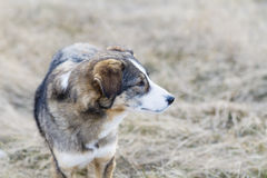 Portrait of a homeless dog outdoor Royalty Free Stock Image