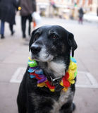 Portrait of a homeless' dog Royalty Free Stock Photos